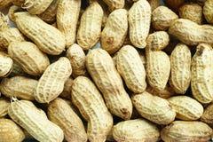 Fond d'arachide Photographie stock libre de droits