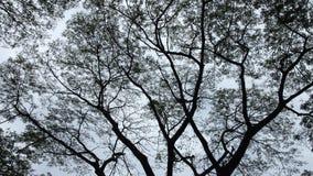Fond d'arbre Image libre de droits