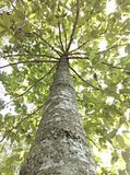 Fond d'arbre Photographie stock libre de droits