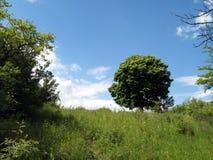 Fond d'arbre Photographie stock