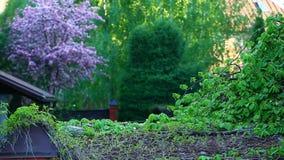 Fond d'arbre d'amandes de violette de jardin personne longueur de hd banque de vidéos