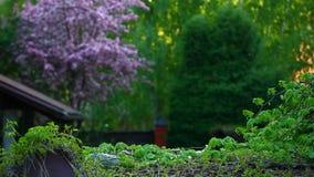 Fond d'arbre d'amandes de violette de jardin personne longueur de hd clips vidéos