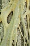 Fond d'arbre autour d'un joncteur réseau photos stock