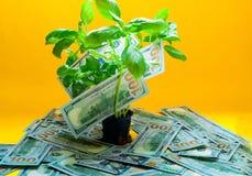 Fond d'arbre avec l'Américain d'argent cent billets d'un dollar Fond-couleur jaune créative de l'année 2019, l'espace de copie photographie stock libre de droits