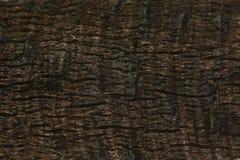 Fond d'arbre de Brown Photo libre de droits