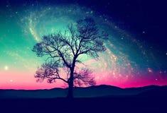 Fond d'arbre de l'espace Images stock