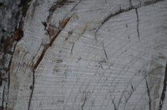 Fond d'arbre de tronçon Photo libre de droits