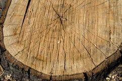 Fond d'arbre tronqué de cercle Photo libre de droits