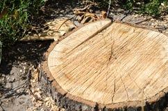 Fond d'arbre tronqué de cercle Images libres de droits