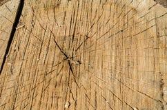 Fond d'arbre tronqué de cercle Images stock