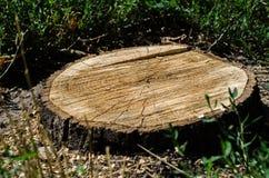 Fond d'arbre tronqué de cercle Image stock