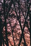Fond d'arbres au-dessus de coucher du soleil rose Photographie stock