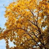 Fond d'arbres d'automne images stock