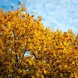 Fond d'arbres d'automne photo stock