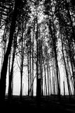 Fond d'arbres de bord de la mer Images stock