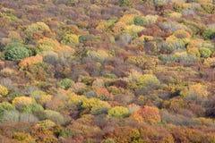 Fond d'arbres forestiers photographie stock libre de droits