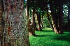 Fond d'arbres forestiers Photos stock