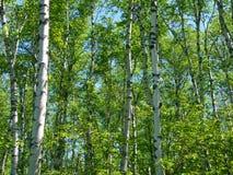 Fond d'Aspen Photo libre de droits