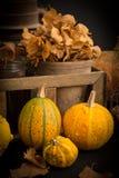 Fond d'automne Photos libres de droits