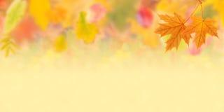 Fond 004 d'automne Photo libre de droits