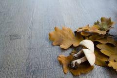 Fond d'automne avec des champignons de couche et des lames image stock