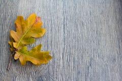 Fond d'automne avec des champignons de couche et des lames photo libre de droits