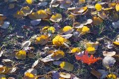Fond d'automne avec des feuilles dans le gel image stock