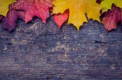 Fond d'automne avec des feuilles de chute photo libre de droits