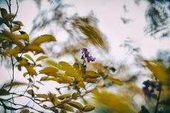 Fond d'automne avec des feuilles et des fleurs, foyer mou Photos libres de droits