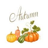 Fond d'automne avec des potirons Illustration décorative des légumes et des feuilles Photos libres de droits
