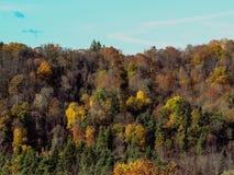 Fond d'automne avec la pente couverte de forêt verte jaune colorée à la colline boisée image libre de droits