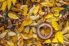 Fond d'automne avec le coeur en bois découpé dans le jaune tombé Photographie stock
