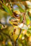 Fond d'automne avec les couleurs et la tache floue, Photos libres de droits