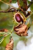 Fond d'automne avec les couleurs et la tache floue, Photo libre de droits