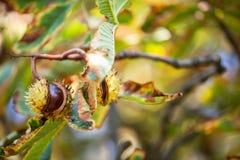 Fond d'automne avec les couleurs et la tache floue, Photographie stock libre de droits