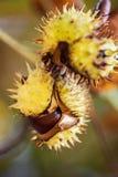 Fond d'automne avec les couleurs et la tache floue, Photographie stock