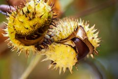 Fond d'automne avec les couleurs et la tache floue, Image stock