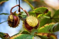 Fond d'automne avec les couleurs et la tache floue Image libre de droits