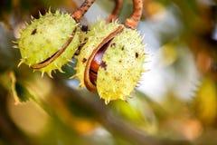 Fond d'automne avec les couleurs et la tache floue Photo stock