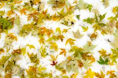 Fond d'automne avec les feuilles colorées sur la neige photo libre de droits