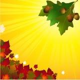 Fond d'automne avec les feuilles et le gland Illustration Libre de Droits