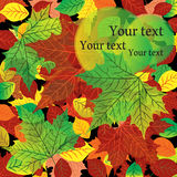 Fond d'automne avec les lames colorées d'érable Photographie stock libre de droits