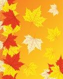 Fond d'automne avec les lames colorées d'érable Images libres de droits