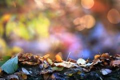 Fond d'automne coloré par doux Photos stock