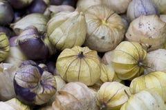 Fond d'automne de physalis de récolte Photos stock