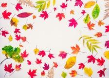 Fond d'automne de vue supérieure avec le cadre ovale de différents types tombés de feuilles multicolores - vertes, jaunes, orange photos libres de droits