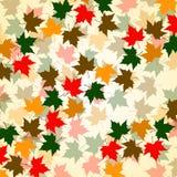 Fond d'automne des feuilles d'érable Photos stock