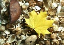 Fond d'automne et lame jaune Images stock