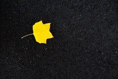 Fond d'automne - feuille jaune de marple s'étendant sur l'asphalte noir r Images stock