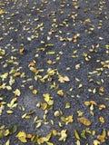 Fond d'automne feuilles tombées des arbres Humeur d'automne - tristesse légère image stock